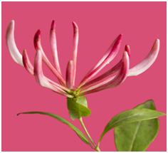 reddishpinkallures Różowy   kolor roku 2011